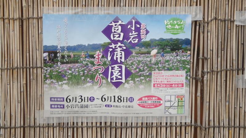 shoubu_001.jpg